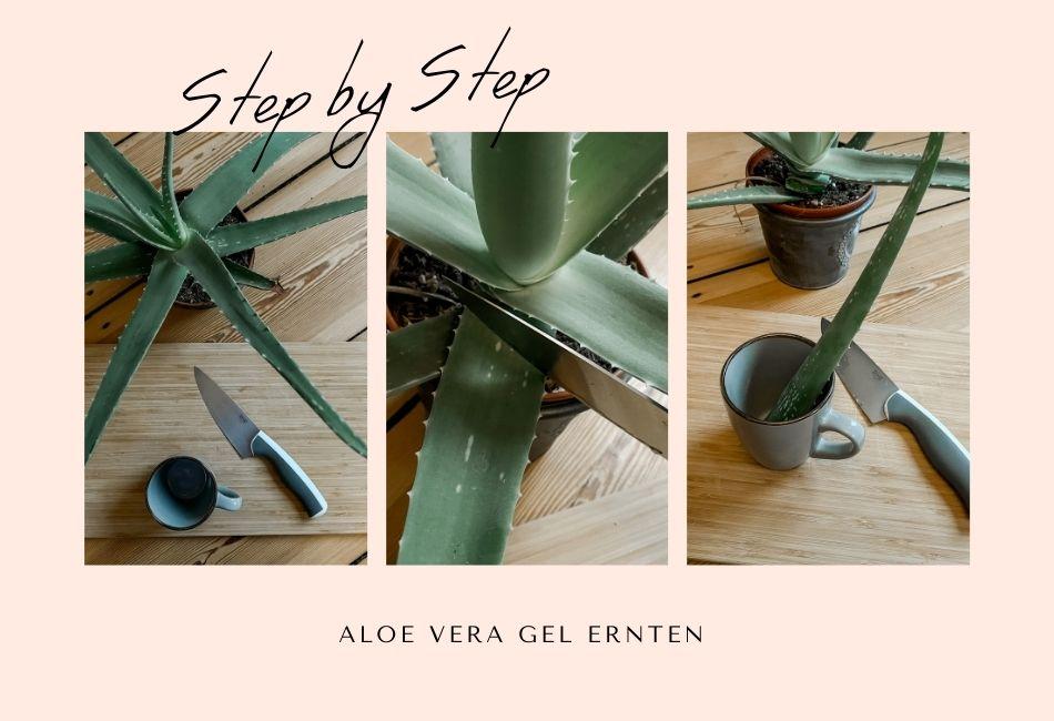 Anleitung Aloe Vera Gel selber machen