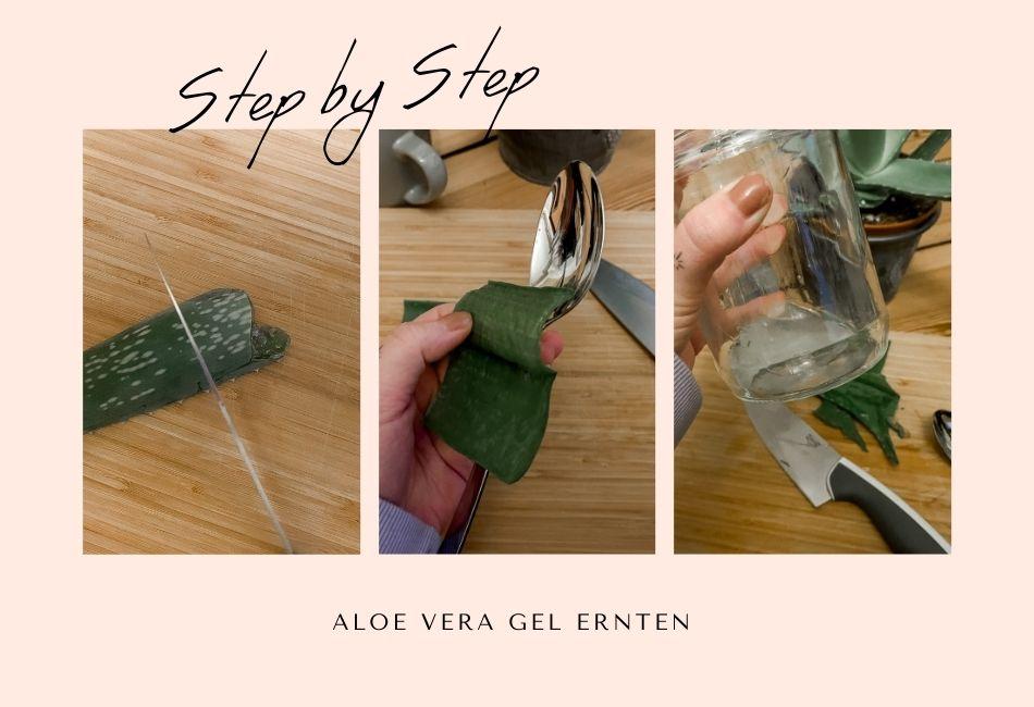 Anleitung Aloe Vera Gel selber machen Schritt für Schritt