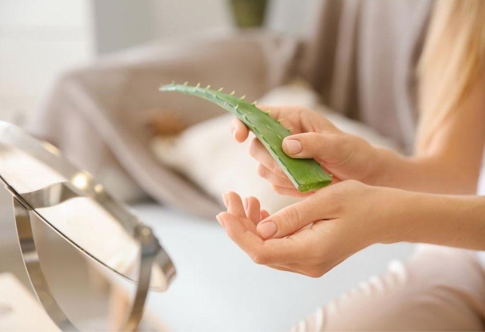 Aloe Vera Haut Wirkung und Anwendung Das kann die Superpflanze